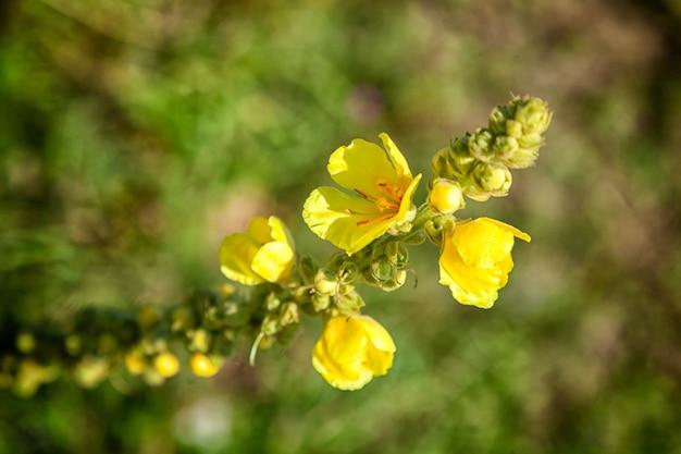 Close-up de uma pequena flores amarelas em um dia ensolarado e quente