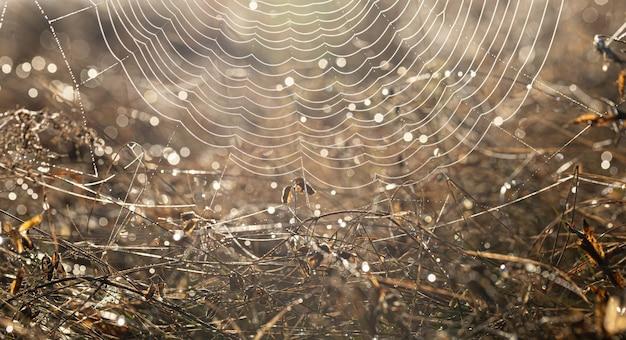 Close-up de uma teia de aranha em gotas de orvalho em um campo em uma manhã ensolarada.