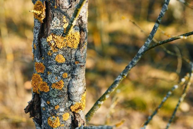 Close up de uma textura da casca de árvore com musgo.