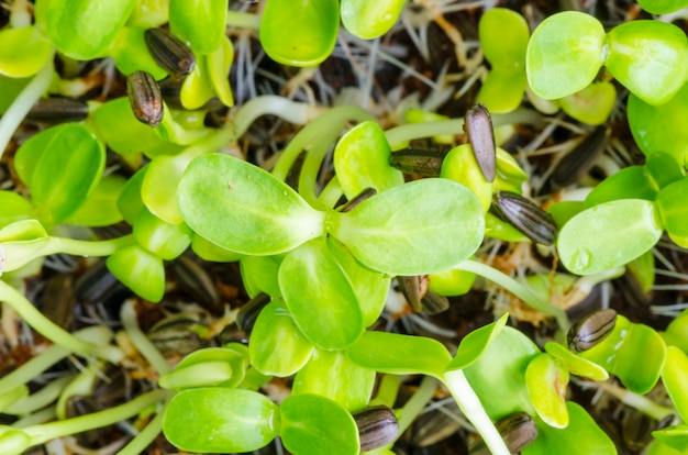 Close-up, de, verde, seedling, crescendo, de, solo