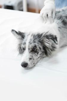 Close-up, de, veterinarian's, passe, ligado, doente, cão, mentindo, branco, tabela, em, clínica