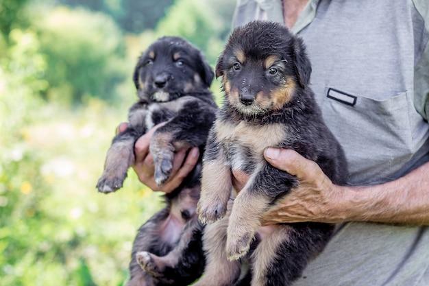 Close-up disponível segurando cachorrinhos pretos
