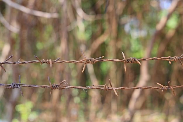 Close-up do arame farpado do metal na natureza.