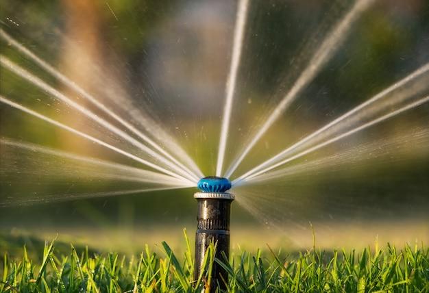 Close-up do aspersor de irrigação automática regando o gramado ao pôr do sol.