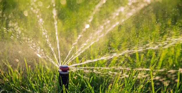 Close-up do aspersor de irrigação regando o gramado sob os raios do sol.