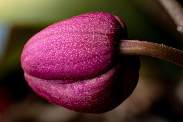 Close-up do botão da orquídea vermelha. fundo floral.