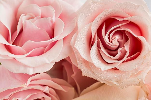Close-up do conceito de dia dos namorados com rosas