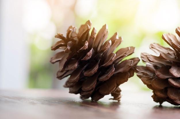 Close up do cone do pinho em um fundo natural da mesa de madeira. temporada de primavera.