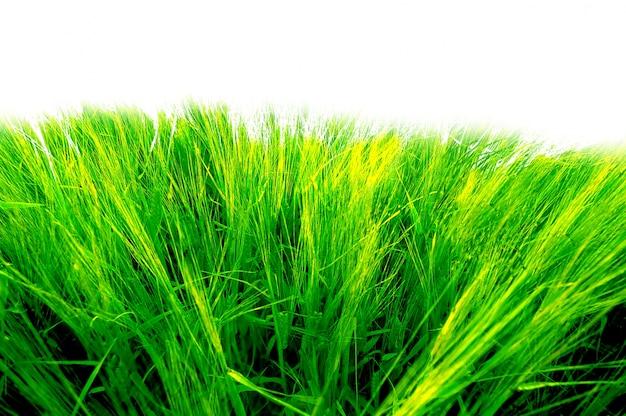 Close-up do gramado brilhante
