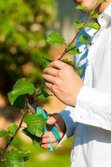 Close-up do homem aparar árvore de fruto