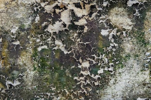 Close-up do musgo seco na parede da rachadura do cimento branco e na pintura descascada causada pela água e pela luz solar. descasque a parede da pintura de casa branca com mancha preta. textura de fundo.