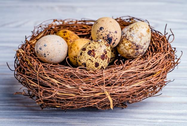 Close-up do ninho do animal com ovos de codorna nele.