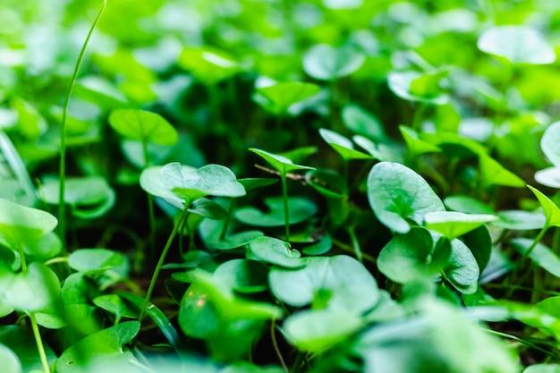 Close-up do solo de um jardim coberto de mudas verdes e frescas.