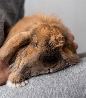 Close-up dono segurando coelho nas pernas