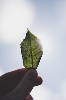 Close up dos dedos de uma pessoa segurando uma pequena folha verde contra o céu ao fundo
