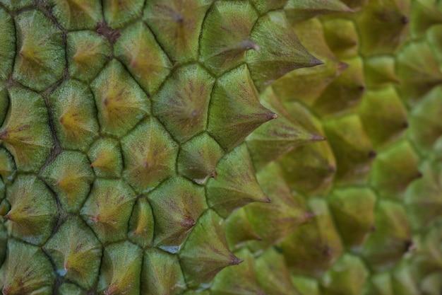 Close-up, durain mon thong, rei dos frutos.