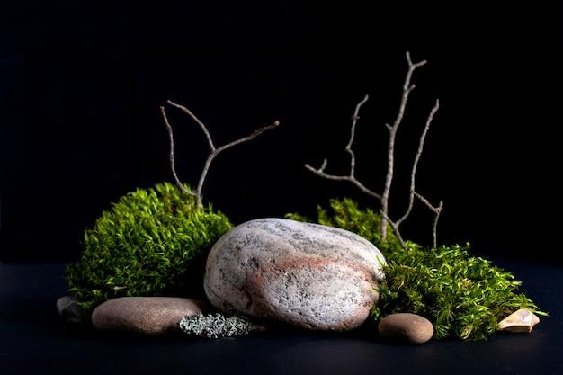 Close-up em casca de árvore, musgo e pedras
