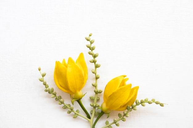 Close-up em flores amarelas isoladas Foto Premium