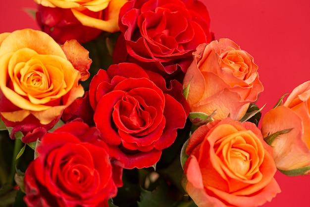 Close-up em lindas rosas isoladas