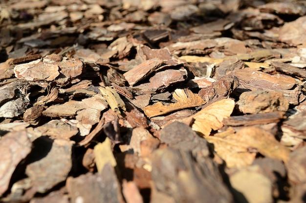 Close-up em pedaços de casca no chão. textura de casca.