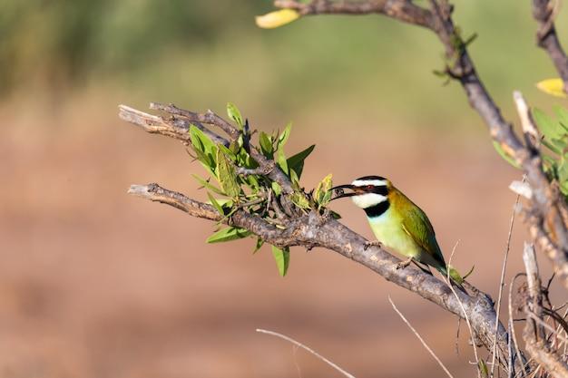 Close-up em um pássaro sentado em um galho