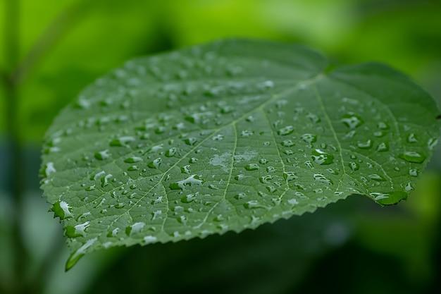Close-up em uma folha bonita com gotas de água após a chuva