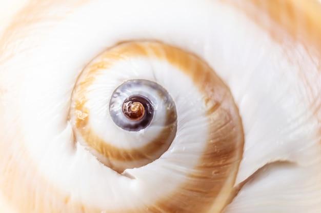 Close up espiral do caracol do caracol. fotografia macro detalhada. grande profundidade de campo. o conceito de férias, mar, verão, viagens, decoração.