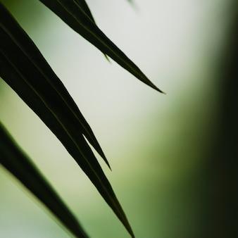Close-up, extremidades, de, folha palma