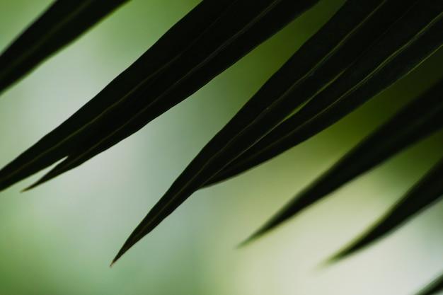 Close-up, extremidades, de, folha