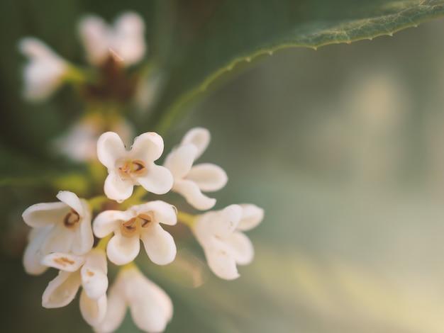 Close-up flor buquê branco