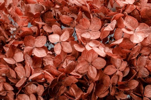 Close up floral do fundo da hortênsia seca para ilustrar a poesia, abstrações, associações.
