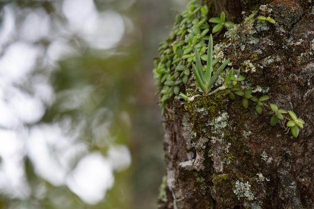 Close up foto de tronco de árvore fresca