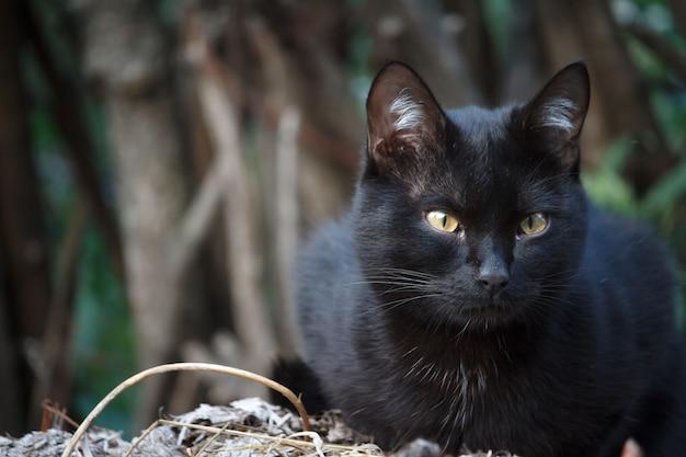 Close-up gato shorthair preto com olhos amarelos senta-se no telhado do galpão e olha cuidadosamente ao redor