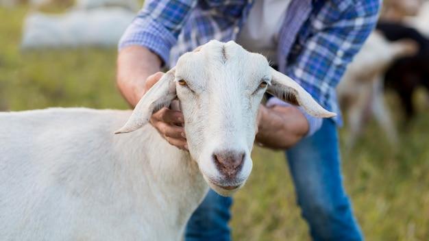 Close-up homem carregando cabra