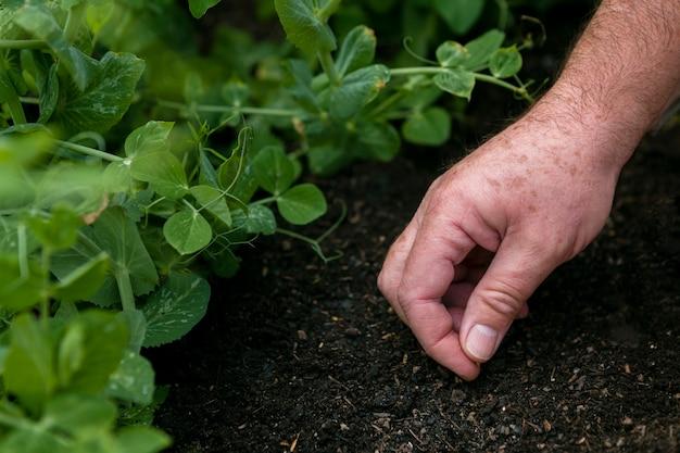 Close-up homem colocando sementes no solo