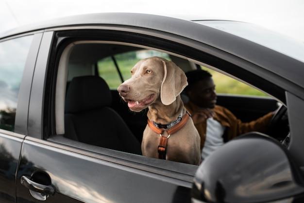 Close-up homem dirigindo com cachorro sorridente