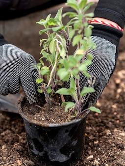 Close up homem plantando