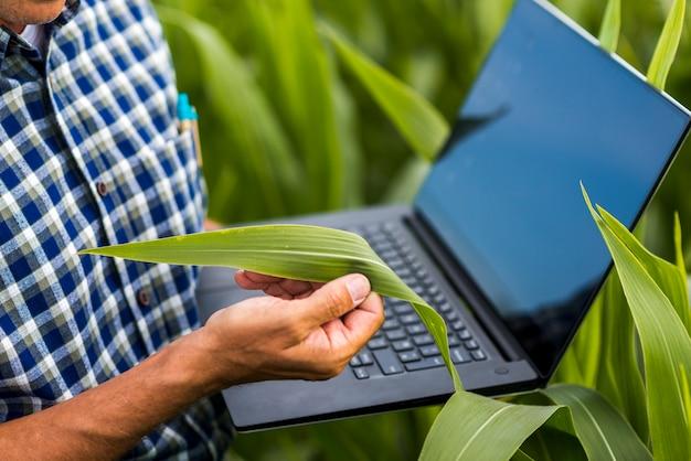 Close-up homem segurando uma folha de milho