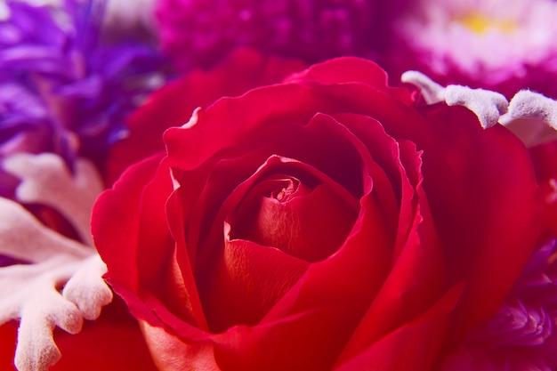 Close-up lindo botão de rosa vermelha