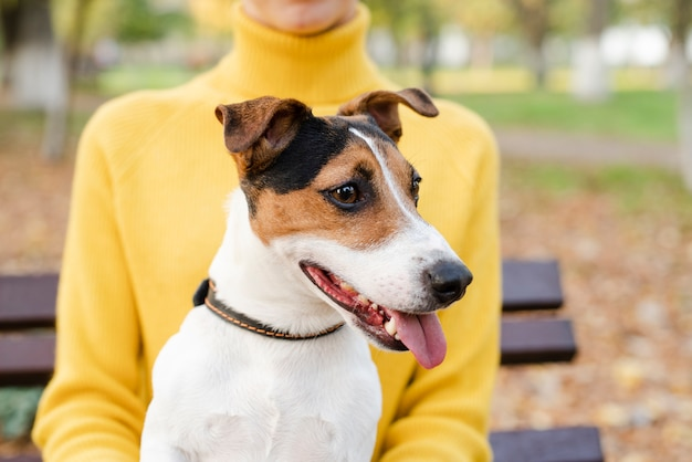 Close-up lindo cachorro olhando para longe