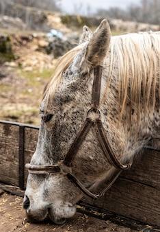 Close-up lindo cavalo comendo