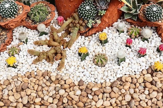 Close-up lindo jardim de cactos tropicais