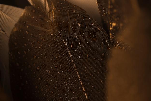 Close-up macro de uma pena marrom com gotas
