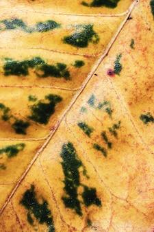 Close up macro folha textura