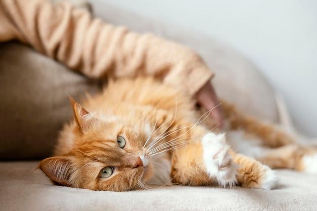 Close-up mão borrada acariciando o gato