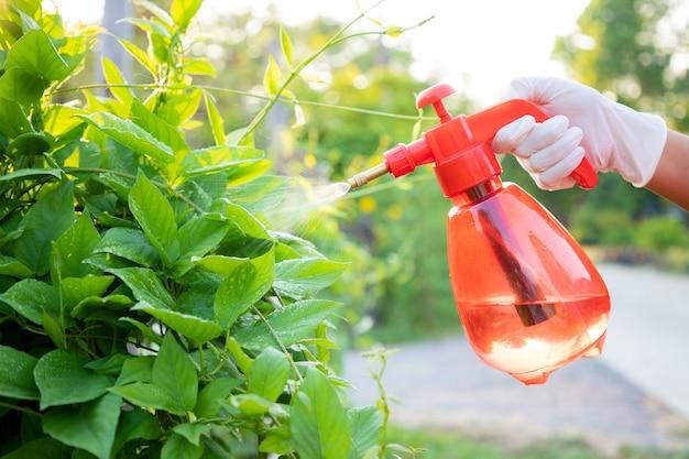 Close-up, mão da mulher usar luvas usando garrafa pulverização misturar bio fertilizante para vegetais verdes no farmimg. manutenção de vegetais não tóxicos para comer em família.