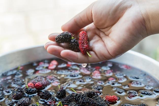 Close-up mão mostrar amora na água para fazer suculenta