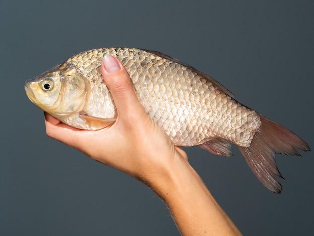 Close-up mão segurando peixe cru
