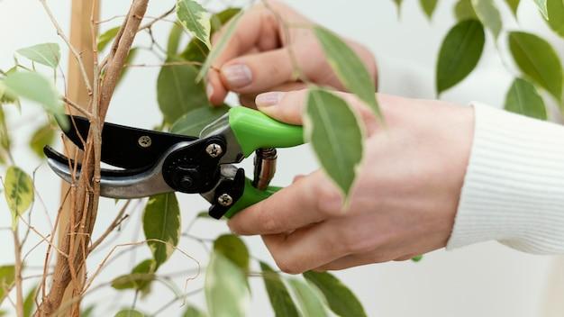 Close-up mãos cortando planta