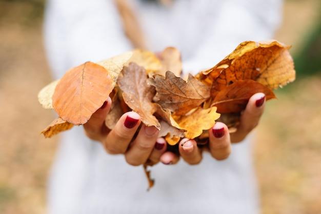 Close-up, mãos de mulher segurando folhas de cor laranja no parque na temporada de outono.